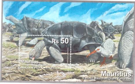 2009 MS tortoise